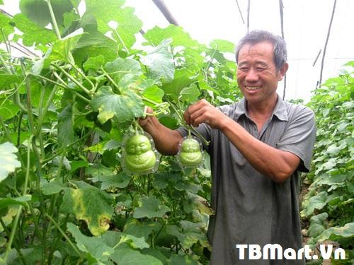 Hình Ảnh Dưa Lê Thần Tài Cao Cấp - Hàng Loại 1 của TB MART.